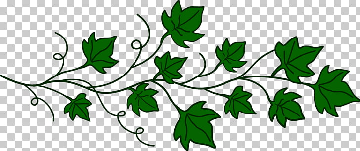Vine Computer Icons , ivy PNG clipart.