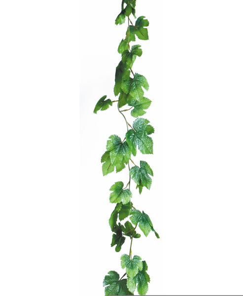Download Free png Free Ivy Vine Clipart.
