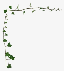 Transparent Ivy Png.