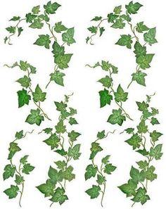 Ivy fruit clipart #16