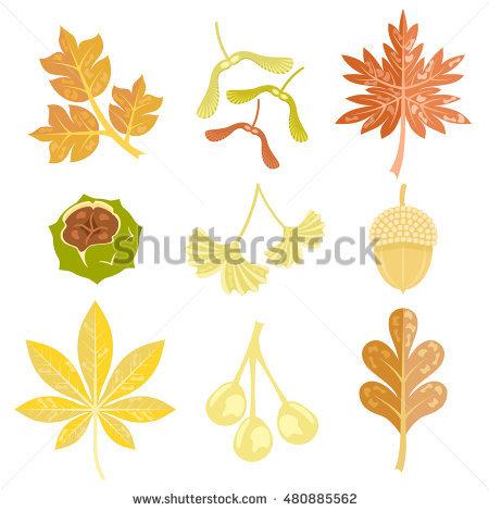 Set Of Autumn Leaves, Nuts And Fruit. Ivy Leaf, Maple Keys, Maple.