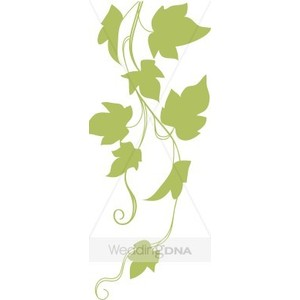 Ivy growth clipart #14