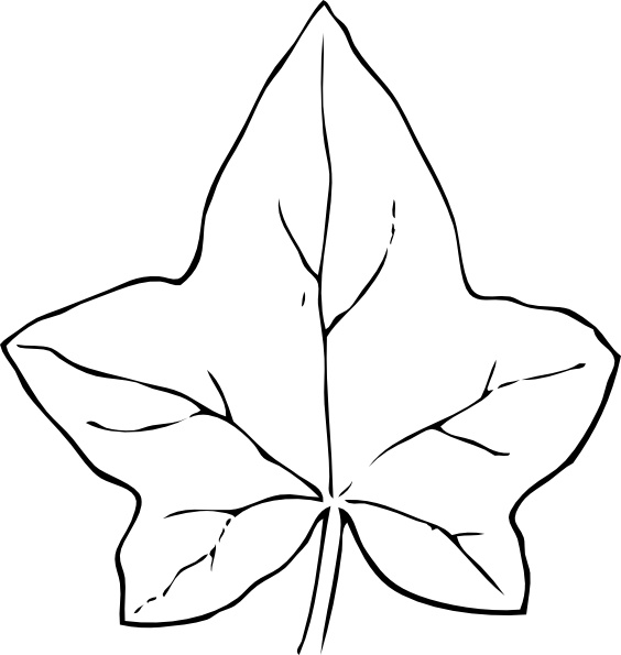 Ivy Leaf clip art Free vector in Open office drawing svg ( .svg.