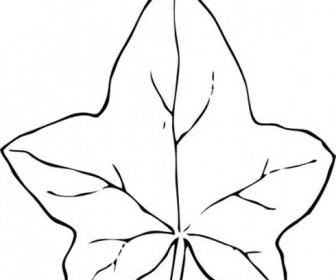 Ivy leaves clip art.