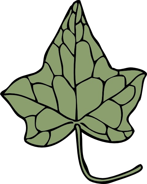 Oak Ivy Leaf clip art Free vector in Open office drawing svg.