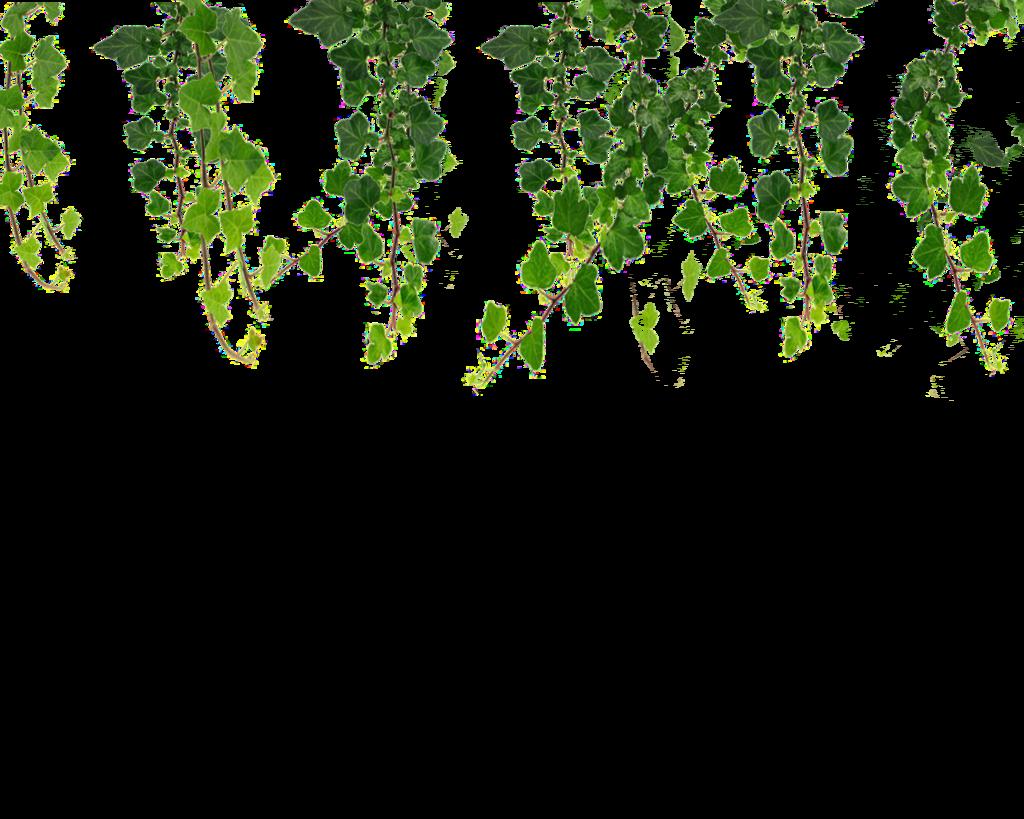 Flower vines on trellis clipart.