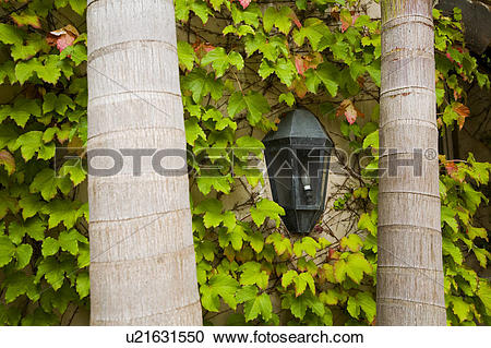 Stock Photography of Exterior wall light on ivy wall between two.