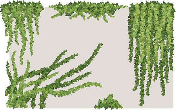 Ivy Wall Clip Art, Vector Images & Illustrations.