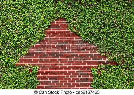 Stock Images of Brick Wall and Ivy.