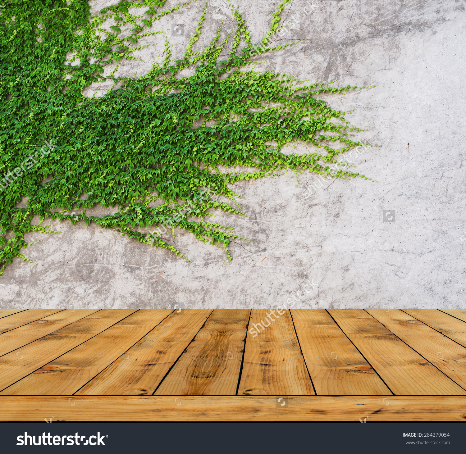 Green Leaves Ivy Wall Wood Floor Stock Photo 284279054.