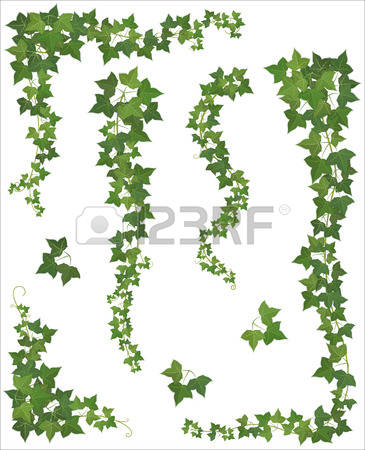 575 Ivy Wall Stock Illustrations, Cliparts And Royalty Free Ivy.
