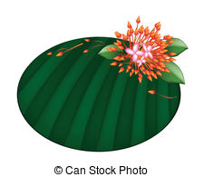 Ixora coccinea Clip Art Vector and Illustration. 14 Ixora coccinea.