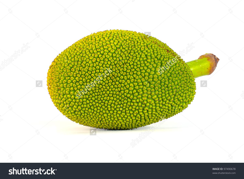 Green Jack Fruit On White Background Stock Photo 97490678.