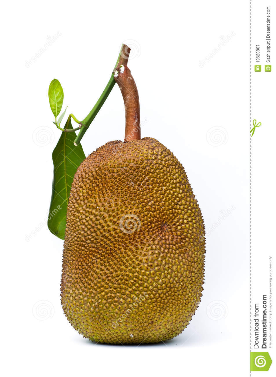 Jack Fruit On White Background Royalty Free Stock Photography.