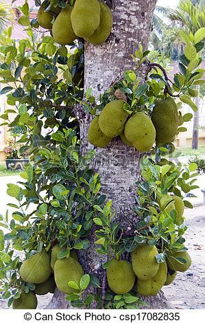 Stock Photos of Jackfruit.