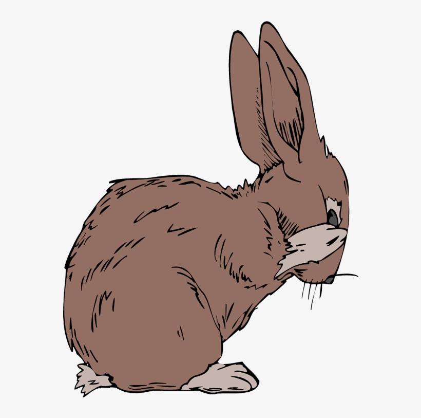 Jack Rabbit Clipart Black And White.