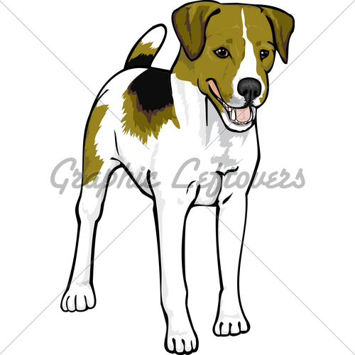 Jack Russel Terrier Smooth · GL Stock Images.