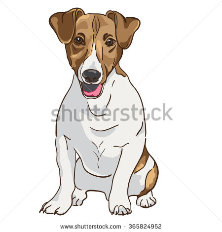 Jack Russell Terrier Stock Photos, Royalty.