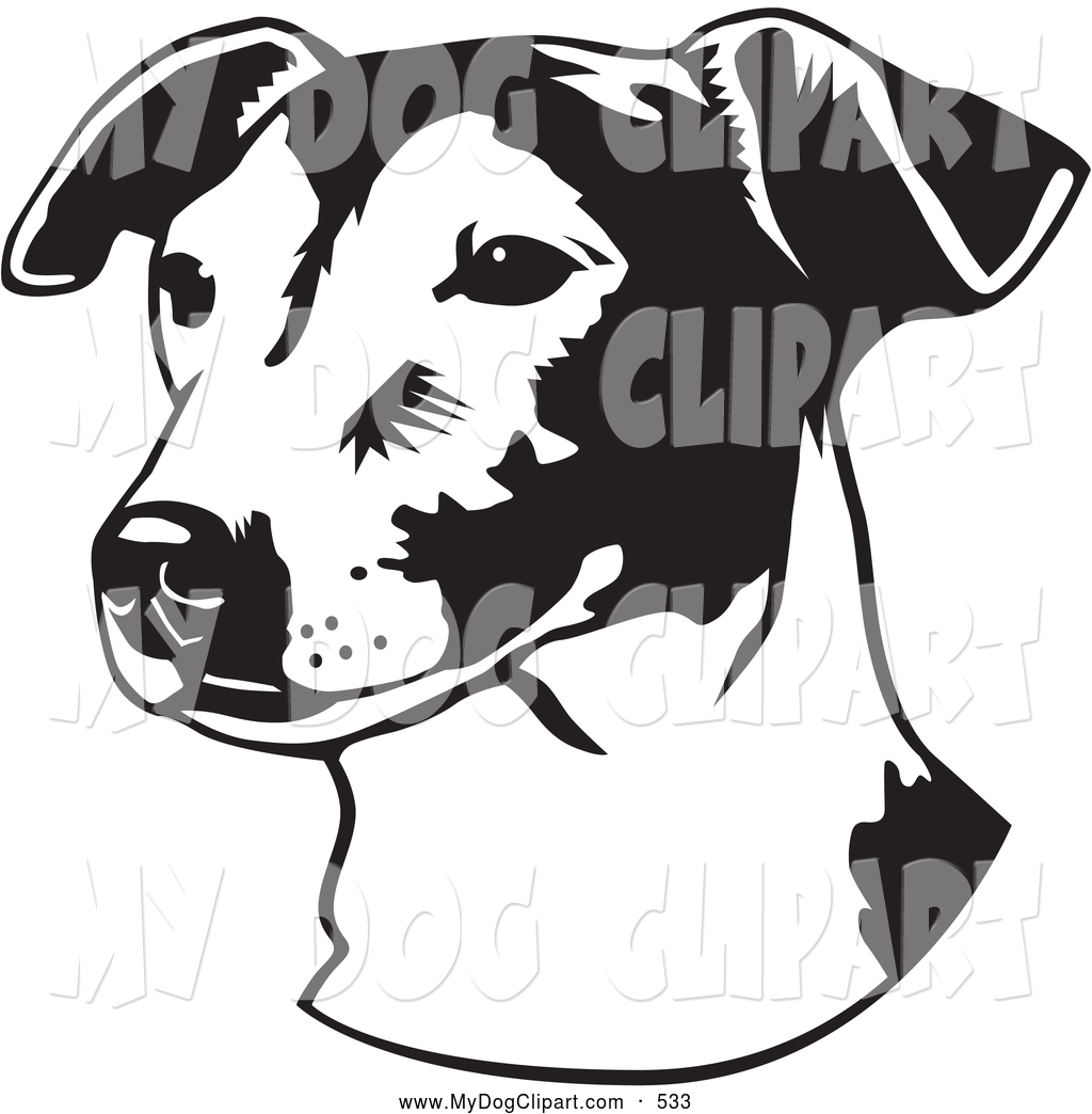 Clip Art of a Cute Jack Russell Terrier Dog, or Jrt, Looking off.