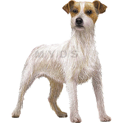 Jack Russell Terrier clipart graphics (Free clip art.
