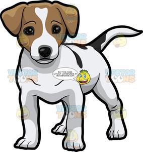 A Cute Little Jack Russell Terrier Puppy.