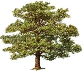 Jack Elementary School to receive gift of 600 trees.