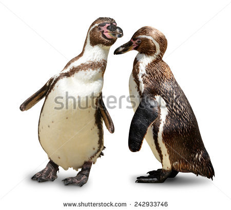 Penguins Isolated Stock Photos, Royalty.