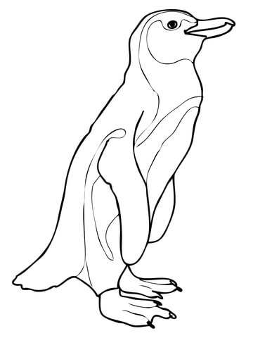 African Penguin coloring page.