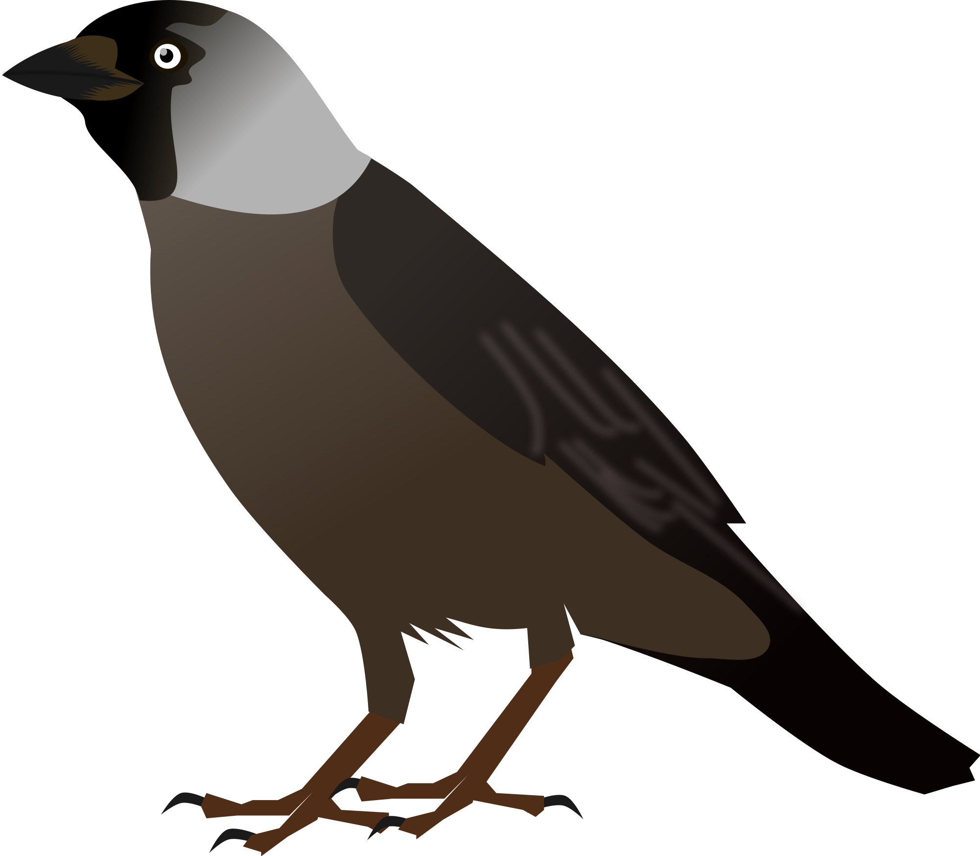 Koyal bird clipart.