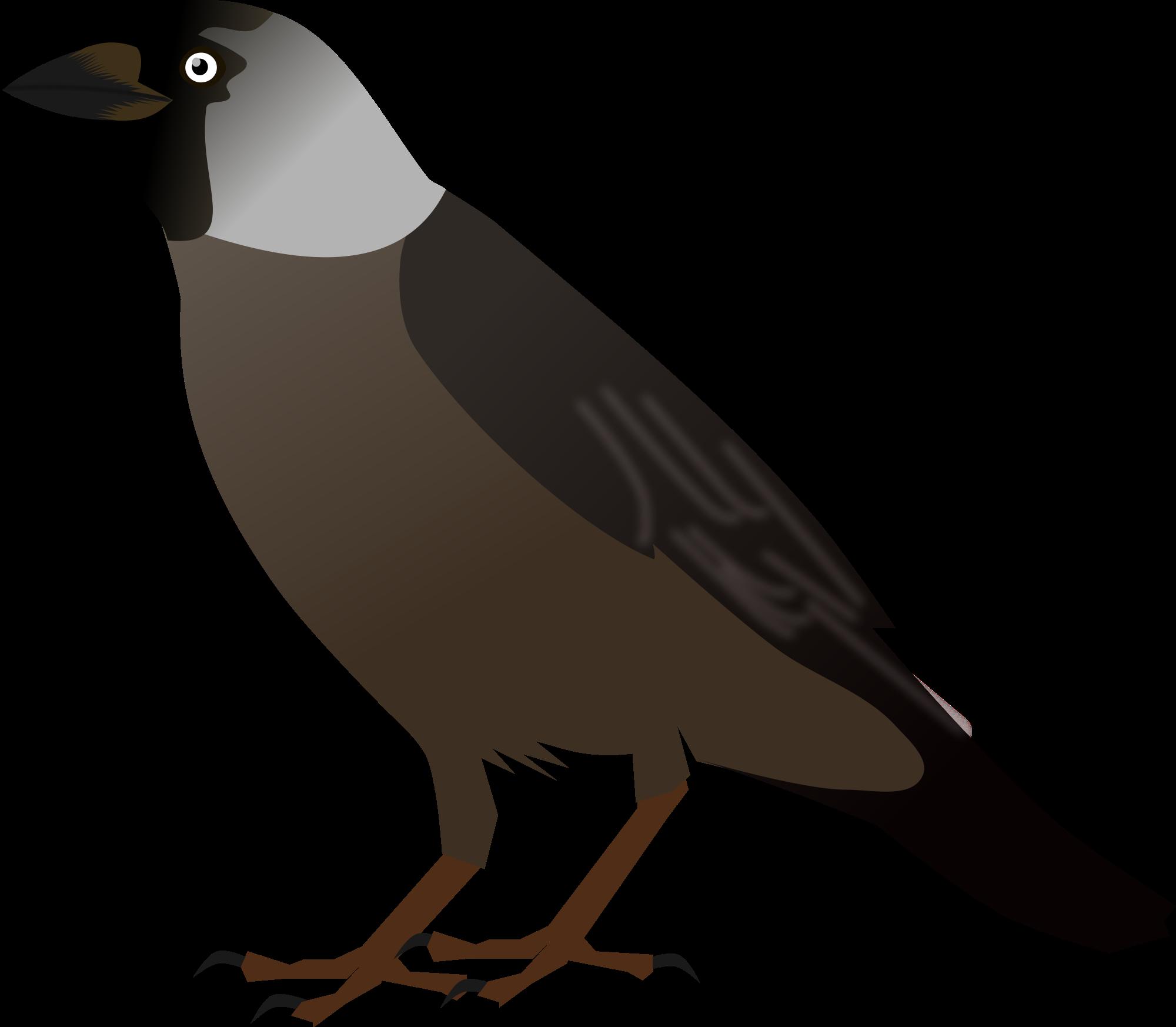 Koyal bird clipart.