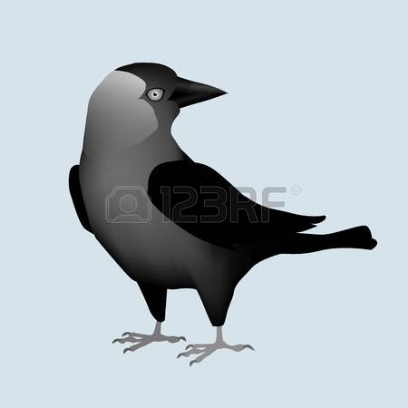 116 Jackdaw Stock Vector Illustration And Royalty Free Jackdaw Clipart.