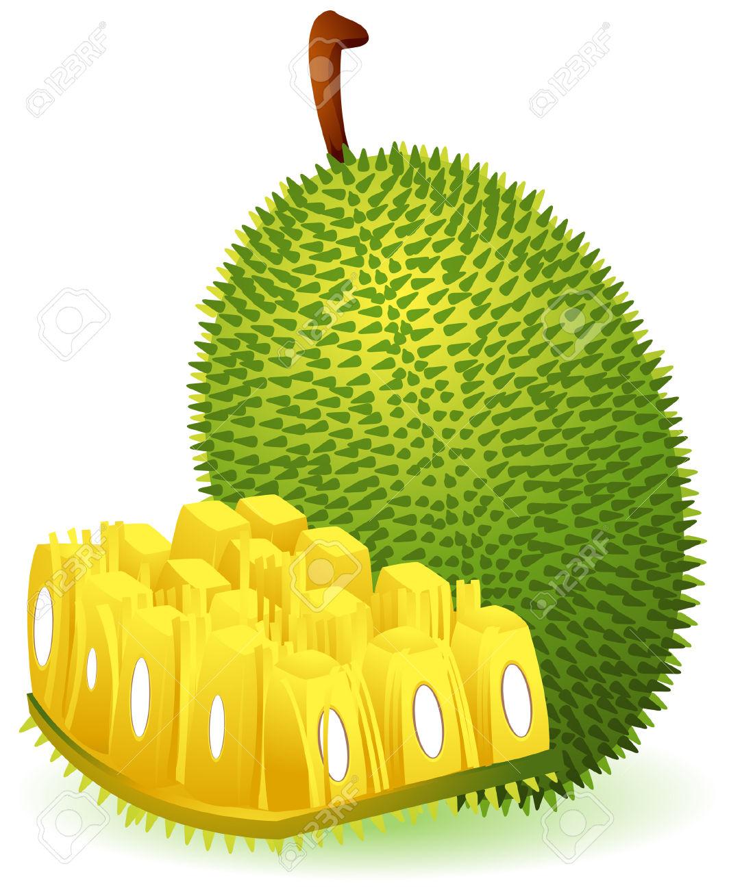 Jack Fruit Clip Art.