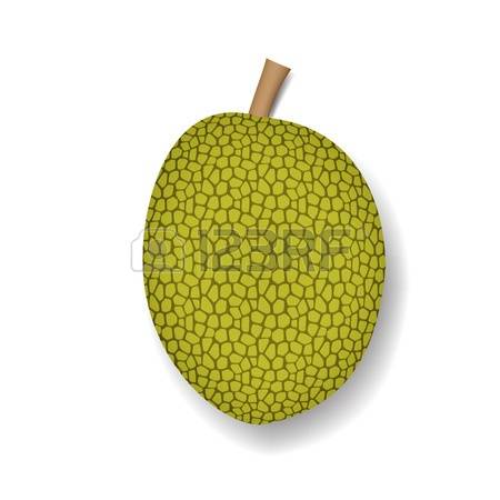 153 Jackfruit Stock Vector Illustration And Royalty Free Jackfruit.