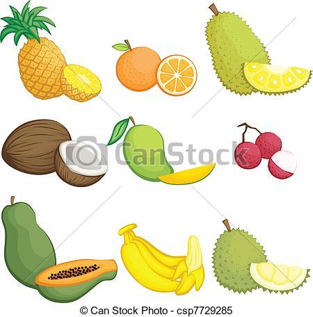 Jackfruit Illustrations and Stock Art. 91 Jackfruit illustration.
