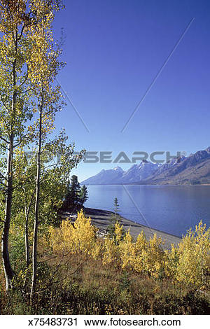 Stock Photography of Jackson Lake, Grand Teton NP, WY x75483731.