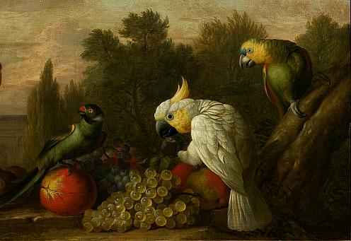 1000+ images about parrots on Pinterest.
