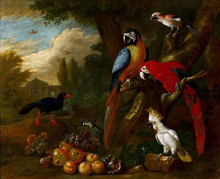 Popular Arte Macaws.