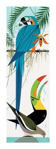 1000+ images about Parrot on Pinterest.
