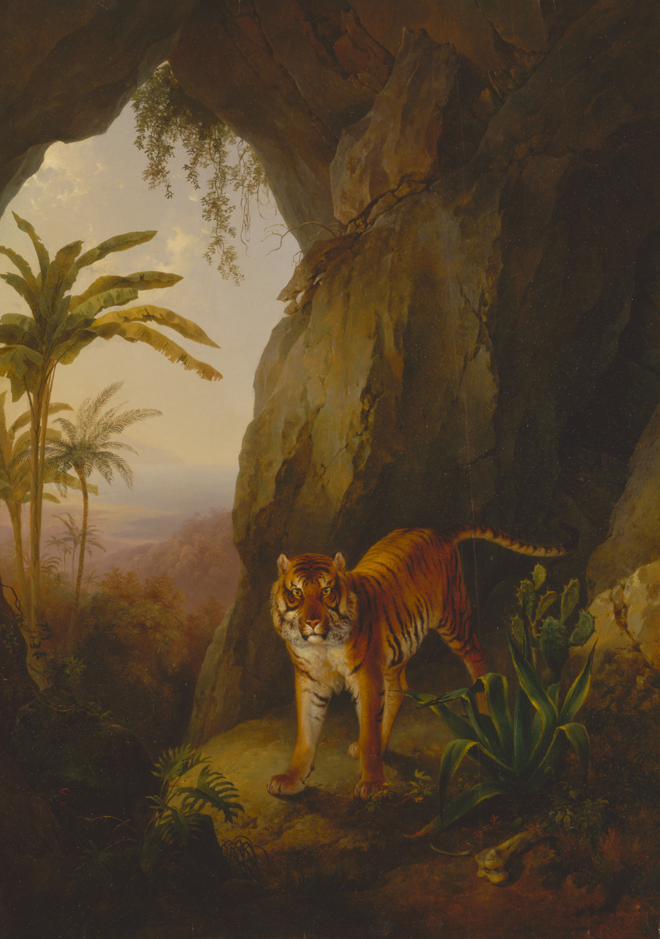 Tiger in a Cave. Jacques.