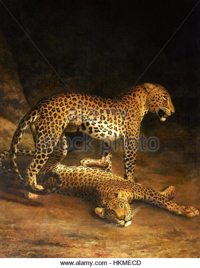 Leopards Drawing Stock Photos & Leopards Drawing Stock Images.