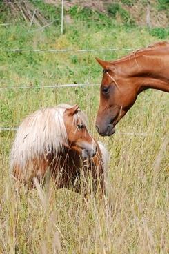 Pony free stock photos download (54 Free stock photos) for.