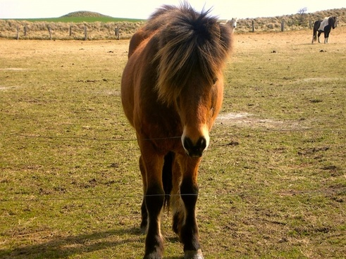 Ponies pictures free stock photos download (46 files) for.