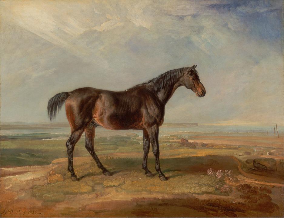 Paint, Horse.