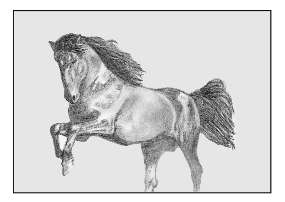 Horse, Draw.