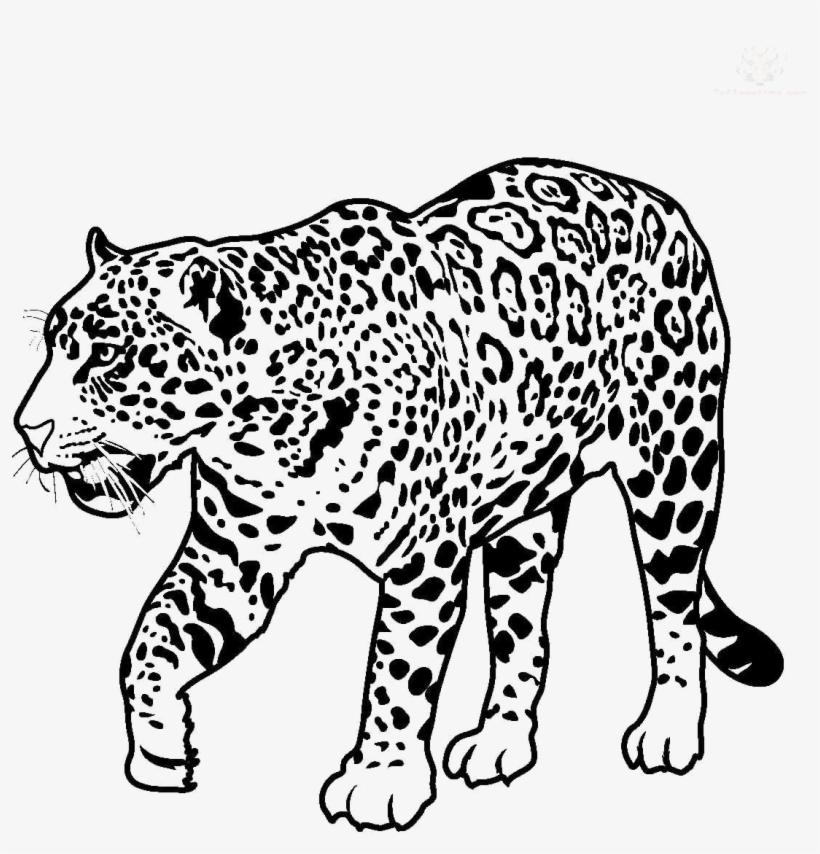 Jaguar Walking Transparent Image.