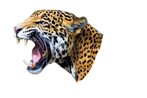 Download Free png Jaguar PNG, Download PNG image with transparent.