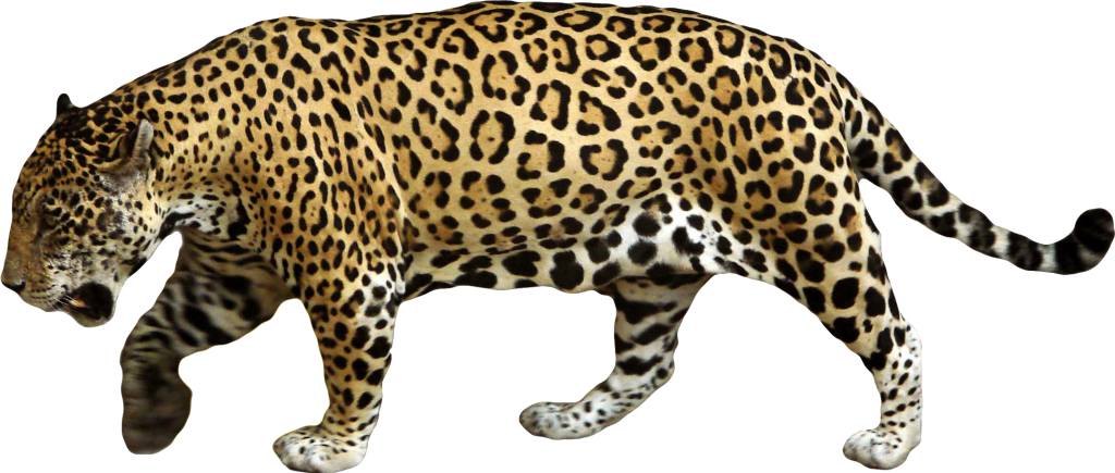 Jaguar PNG images free download.