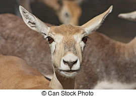 Picture of Funny deer taken in Zoo, Jaipur, Rajastan, India.