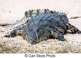 Stock Photos of Alligator in the Jaipur Zoo, India csp9473423.