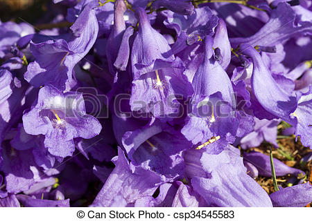 Pictures of Jacaranda tree trunk with small flowers and sky.